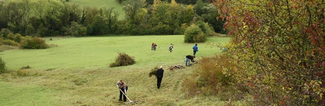 Freiwillige räumen Mähgut von einer Wiese