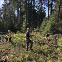 Fünf Personen arbeiten auf einer Waldlichtung