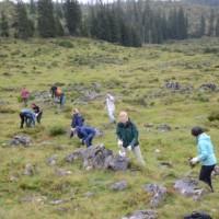 Etwa 10 Personen auf einer mit Steinen durchsetzten Bergwiese, schneiden Gehölze ab und sammeln Zweige auf