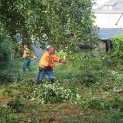 Freiwilliger recht Äste unter Apfelbaum zusammen