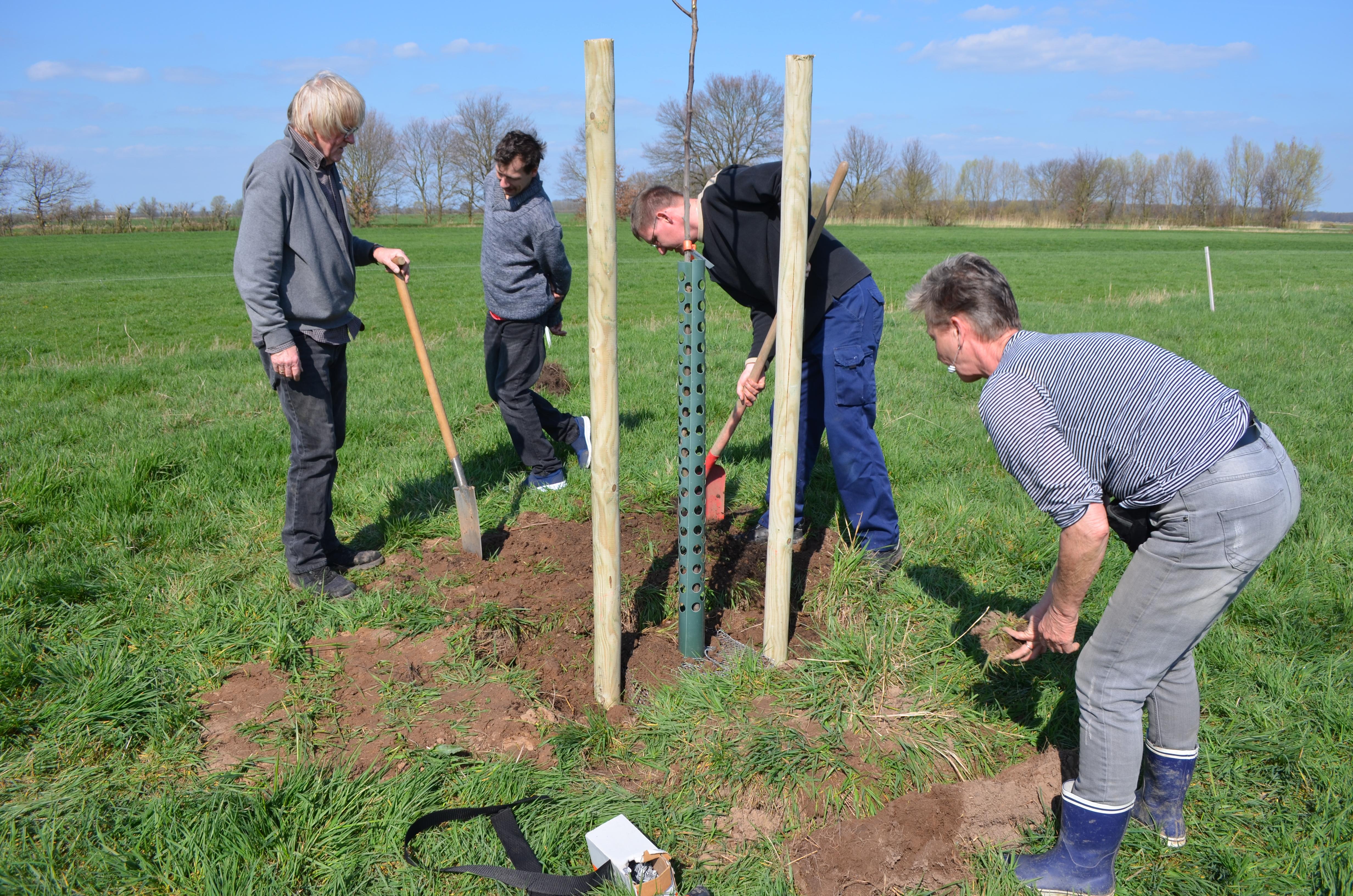 Vier Personen schaufeln Erde um einen jungen Baum