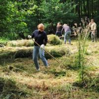 Frau harkt gemähtes Gras auf einer Wiese, im Hintergrund weitere harkende Personen