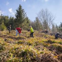 Sieben Personen arbeiten auf einer Wiese am Waldrand